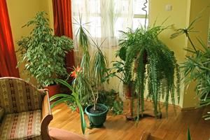 Piante da appartamento magia dei fiori - Aria secca in casa ...